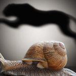 Vite fait, mal fait : éloge de la lenteur